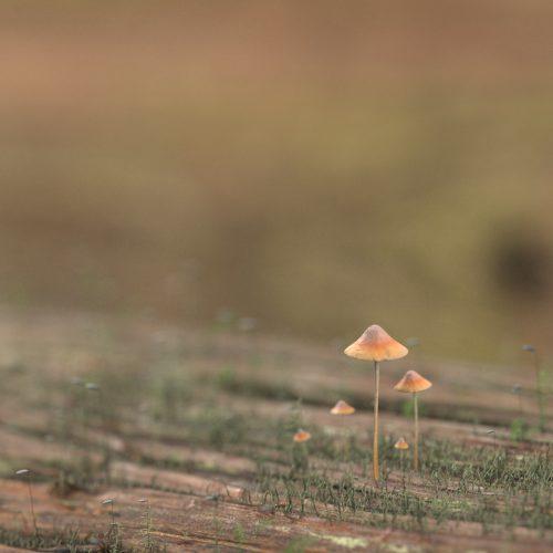 自主制作「Mushroom」